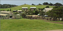 Ace Hi Riding Ranch - Coogee Beach Accommodation